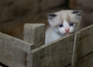 If you're afraid you're not doing enough, you might feel small and even selfish. Kitten looking lost in a box.